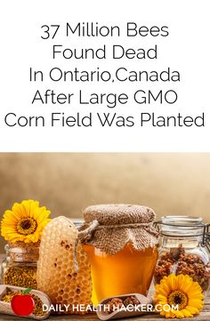 37 Million Bees Found Dead In Ontario, Canada After Large GMO Corn Field Was Planted