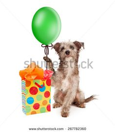Dog Birthday Images Stock Photos Vectors