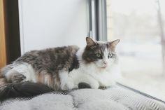 Vesper Cat | Pawshake
