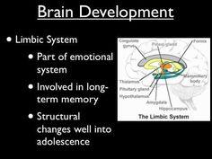 Adolescent Brain Development - Part 2 - YouTube