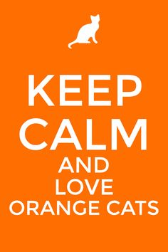 I love them all but orange kitty cats are my favorite.