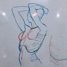 Jisu (@missjisu) / Twitter Human Anatomy Drawing, Human Figure Drawing, Body Reference Drawing, Art Reference Poses, Body Drawing Tutorial, Anatomy Sketches, Anatomy For Artists, Art Poses, Drawing Base