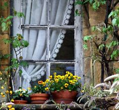 charming cottage window and lovely potted pansies ~ cheerful
