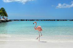 someday i will go to flamingo beach in aruba.
