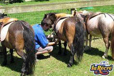 Les poneys sont de retour à la Récré des 3 Curés.