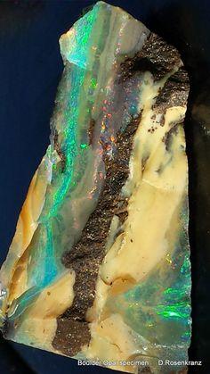 Boulder Opal specimen ... by Dieter Rosenkranz ... Thanks, Dieter. @djrosen ... for this beautiful Opal