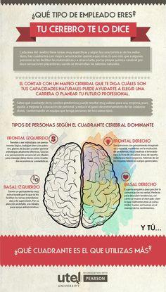 Tipos de personas según el cuadrante cerebral