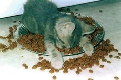 still hungry Kitty?