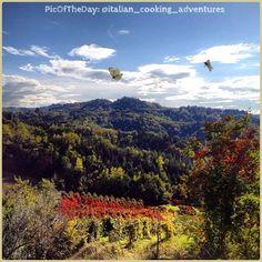 La #PicOfTheDay #turismoer di oggi ci porta a volare con le #farfalle sulle prime #colline di #Cesena, tra boschi e #vigneti ammantati d'#autunno :D Complimenti e grazie a @italian_cooking_adventures