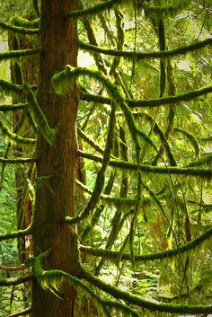 Cathedral Grove's Temperate Rainforest, Vancouver Island, British Columbia, Canada