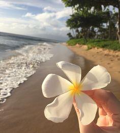 Kā'anapali beach