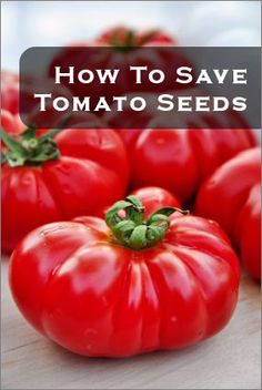 Seed Saving Tips and Ideas • Great Tips and Tutorials! Including from 'tipnut', this tutorial on saving tomato seeds.