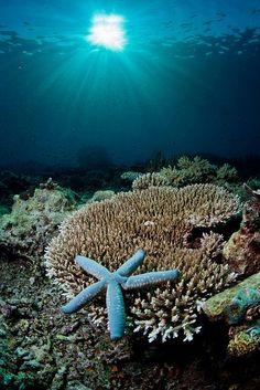 Sea star and coral