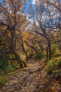 Willow Creek Trail (Roxborough State Park, Colorado) by Steve Harbula All Nature, Walking In Nature, Wonderful Places, Beautiful Places, Spooky Places, Willow Creek, Autumn Scenery, Land Of Enchantment, Walk In The Woods