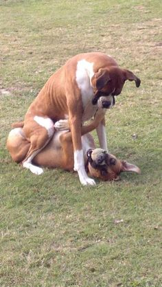 Typical goofy boxers.
