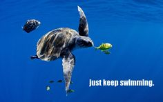 Today is World Turtle Day. Join us in celebrating the majesty of our leathery flippered friends!