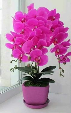 Learn how to grow Phalaenopsis Orchids and care tips that will help you get healthy plants. Phalaenopsis orchids are some of the most common orchids in. Beautiful Flowers Wallpapers, Wonderful Flowers, Beautiful Flowers Garden, Rare Flowers, Flowers Nature, Exotic Flowers, Beautiful Roses, Pretty Flowers, Pink Flowers