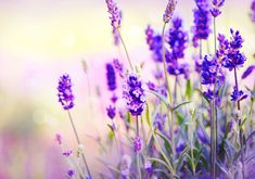 If you ever have trouble falling asleep at night, try spritzing some lavender essential oil into the nighttime air. Lavender helps calm anxiety and can soothe the mind and body to help you sleep more soundly.