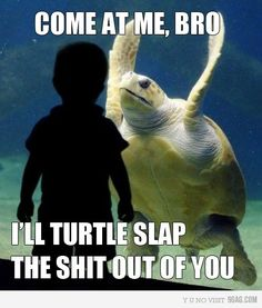 Come at me, bro.  I'll turtle slap the shit out of you.