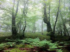 Bosque de Hermo, Parroquia de Monasterio de Hermo, Concejo de Cangas del Narcea, Asturias. Foto: laplumadelescribano.blogspot.com