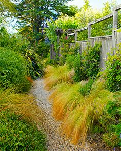 New landscaping ideas with grasses