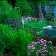 something rather lovely about 'patch it' together allotment gardening! This is like our last allotments pallet fence.