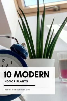 Don't mess up your design scheme with the wrong indoor plant! Use one of these houseplants to bring a modern element into your living space! Modern Indoor Plants | Houseplants for Modern Interior Design | Modern Home Design | Modern Living Room Design | Indoor Plants for Modern Living Room | Indoor Trees, Best Indoor Plants, Outdoor Plants, House Plants Decor, Plant Decor, Zantedeschia, Modern Interior, Interior Design, Apartment Plants