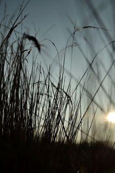 meadow by Marysia Ratajczak on 500px