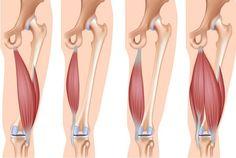 Los músculos isquiotibiales actúan como extensores de la cadera y flexores de la rodilla. Se ubican en la parte posterior de los muslos y no son tan visibles como otros músculos, por lo que suelen uno de los grandes olvidados durante el entrenamiento