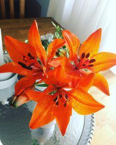 Röj och sol omvartannat blandat med pooldopp.. ☀️���� #liljor #blommor #flowers #sol #sun #pool #lily #lilies http://misstagram.com/ipost/1540698451011866421/?code=BVhqRQGjo81