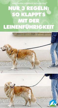 Nur 3 Regeln: so klappt es mit der Leinenführigkeit! Jetzt im Haustier Notfallkarte Hunde Blog! #haustier #notfallkarte