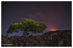 https://flic.kr/p/HsyqHA | The tree and the fire | Volcano Etna