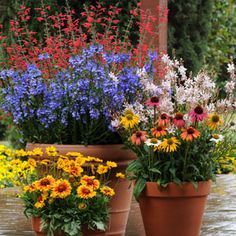 7 Hardy Perennials to Plant and Enjoy Now | Garden Club