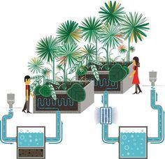 Living Machines, Plant-Based Waste Water Treatment   BiophilicCities #bigyesand