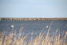 Rutas Mar & Mon: Ruta por el Delta del Ebro