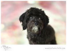 Kellie Michelle Blog: Puppy Love:Puppy Eyes