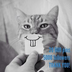 5000 Followers, 20000 Pins. Thank you for following me!