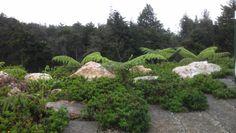 Jardín en Santa Helena, Antioquia, Colombia 2013