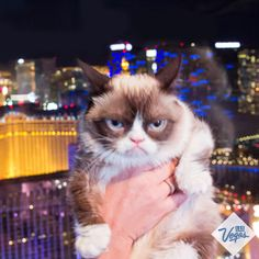 Took a ride on the High Roller with Grumpy Cat. It was awful.There you are ( Better make an appearance on https://www.facebook.com/facecardlasvegas like you promised kitty