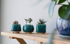 Turquoise Small Plant Pot M size - Set of 3 - Ceramic pot for cactus - Wedding favor - Set of succulent planters#cactus #ceramic #favor #plant #planters #pot #set #size #small #succulent #turquoise #wedding Small Cactus Plants, Mini Plants, Baby Succulents, Succulent Pots, Indoor Plant Pots, Ceramic Planters, Cactus Ceramic, Pot Sets, Flower Pots