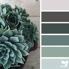 today's inspiration image for { succulent tones } is by @mysuburbanfarm ... thank you, Ainslee, for another wonderfully fresh + inspiring #SeedsColor image share!