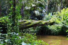 SÃO PAULO - Parque Estadual Turístico do Alto Ribeira - Pesquisa Google