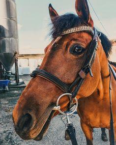 "Pia Høie Holgersen on Instagram: ""de snilleste øynene💛"" Horses, Instagram, Animals, Sink, Pictures, Animales, Animaux, Horse, Words"