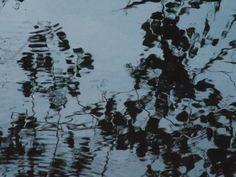 Beleza do pântano...