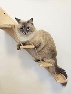 30 móveis cheios de estilo em casa para seu gato brincar