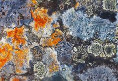 Patterns of existence Delight me ~ Lichen Hope Slide Nicolum Valley Cascade Mountains British Columbia, Canada Cascade Mountains, Patterns, Abstract, Artwork, Painting, Block Prints, Work Of Art, Summary, Pattern
