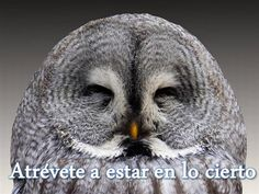 Que tipo de sabedoria domina o seu cérebro? Descubra a resposta com este teste! Nocturne, Owl Background, Background Images, Strix Nebulosa, Photo Animaliere, Gray Owl, Birds Of Prey, Love Birds, Beautiful Birds