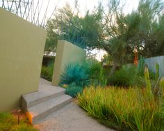 Images from the projects of the landscape architect Steve Martino. Desert Climate, Native Plants, Amazing Gardens, Landscape Architecture, Weed, Garden Design, Beautiful Places, Succulents, Exterior