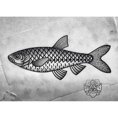 Чебак. #fish #tattoo #tattooflash #hermanix #dotwork