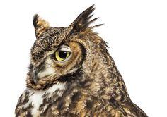 Andrew Zuckerman #photography #owl